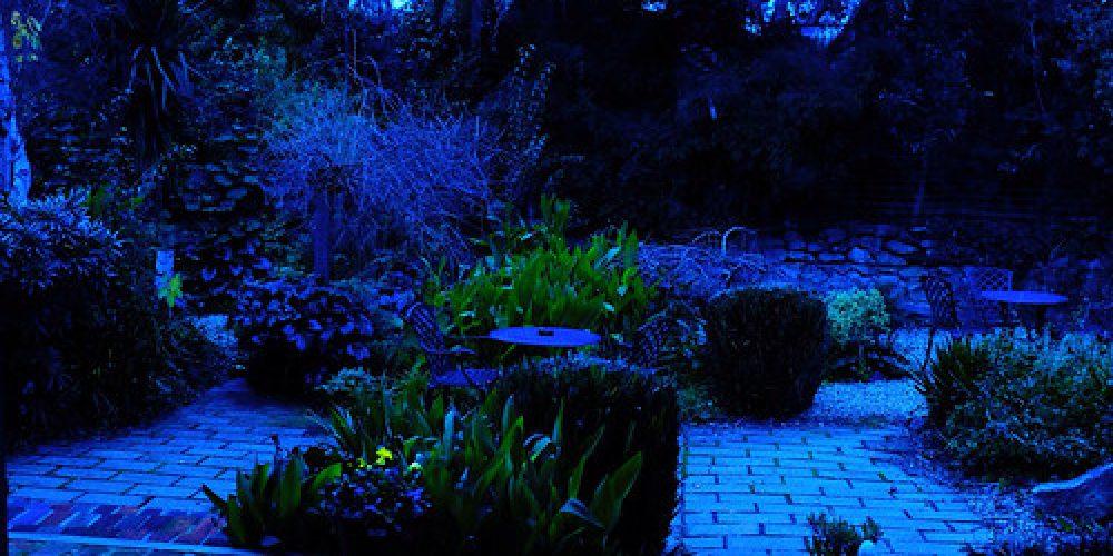 Garden at dusk. Wagga Wagga NSW Aus