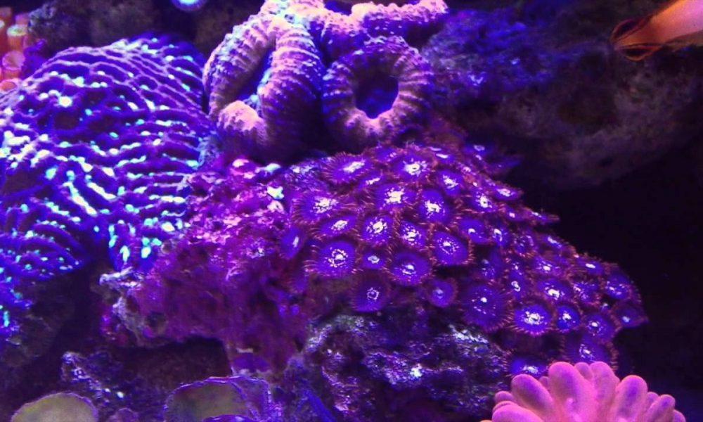 David McIntyre's Wagga Marine Aquarium