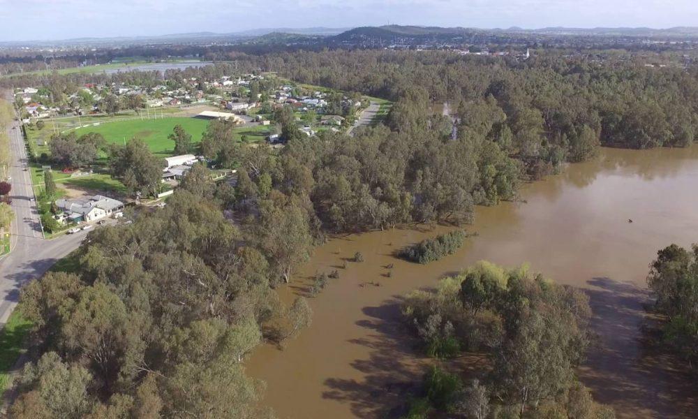 Wagga Wagga 2016 Flood – Wiradjuri Reserve – Black Swan