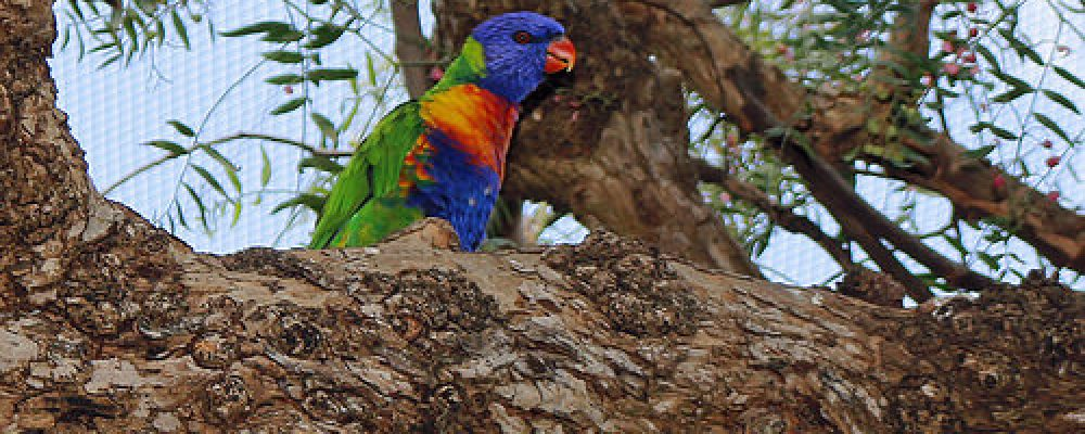Botanical Gardens Wagga Wagga NSW