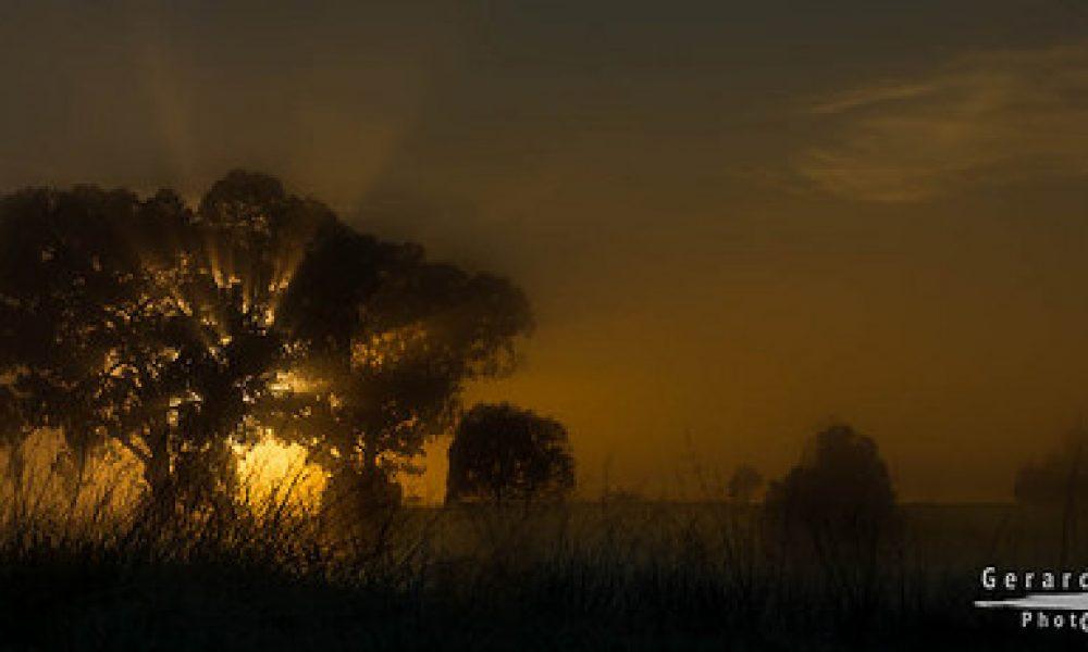 Misty Sunrise || Wagga Wagga || NSW