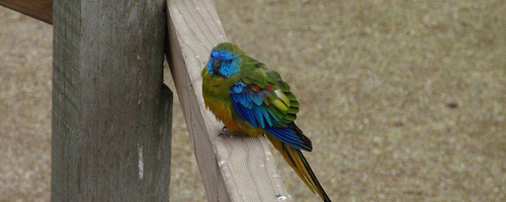 P8230102 – Wagga Wagga, NSW