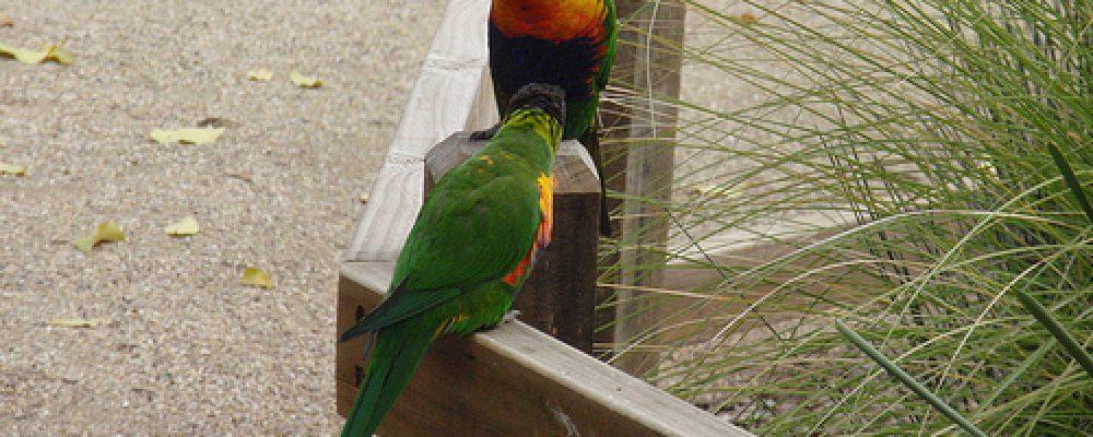 P8230100 – Wagga Wagga, NSW