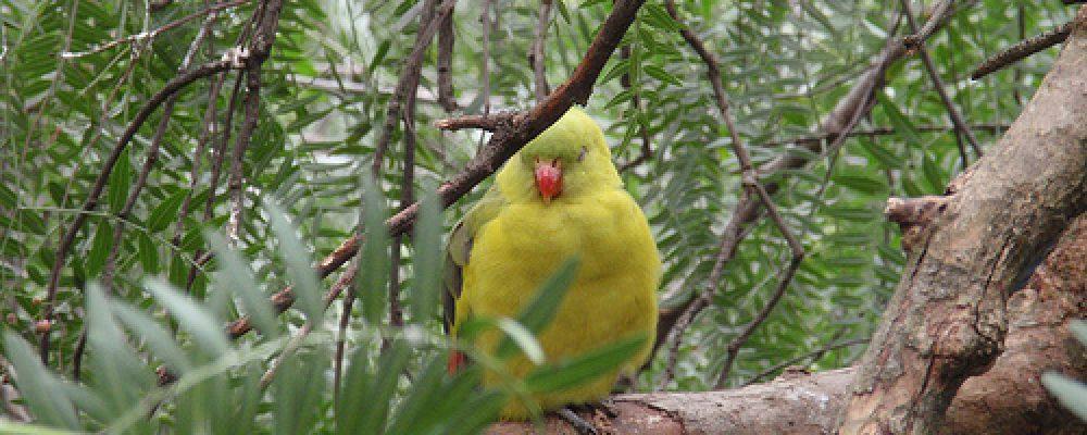 P8230107 – Wagga Wagga, NSW