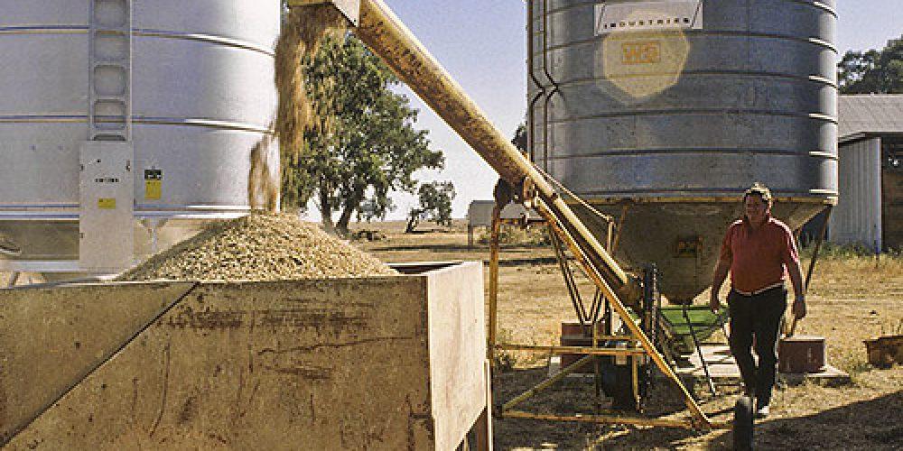 Preparing sheep feed, Wagga Wagga NSW