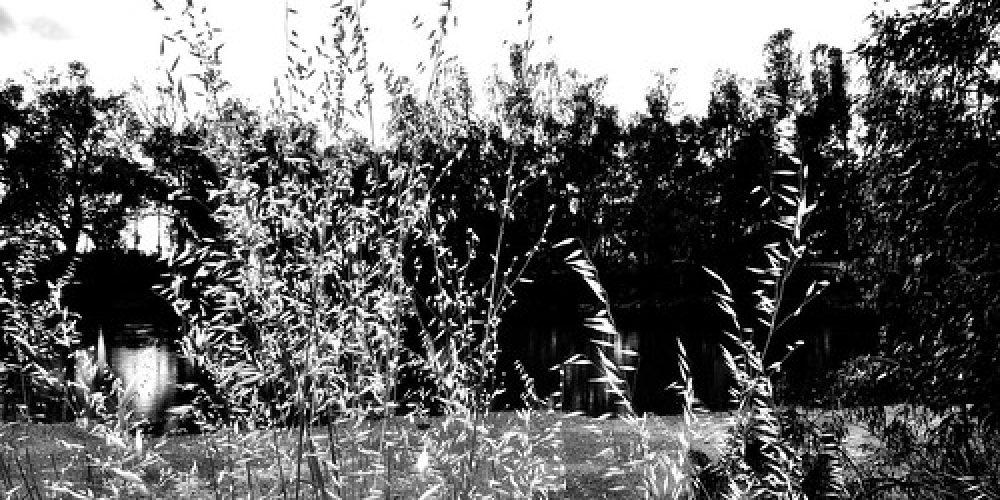 Murrumbidgee grass